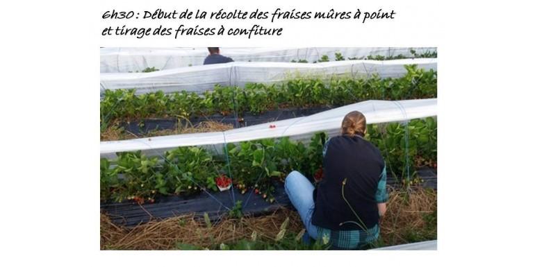 Côté bio dans les boutiques Barajas, c'est le moment de découvrir et de déguster la production locale de fraises de la Ferme du Hérisson.